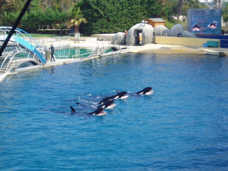Le spectale des orques