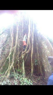 Jungle_alberto_climbing.jpg