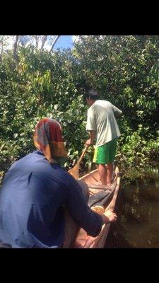 Jungle alberto searching