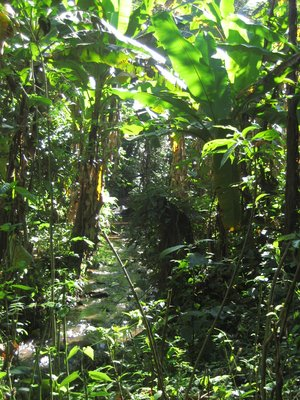 The jungle in Luang Namtha