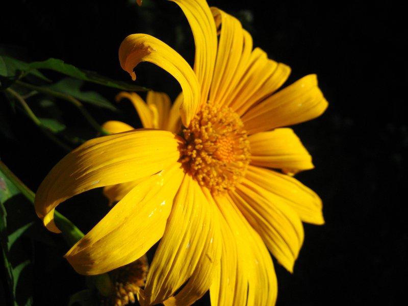 A flower on my trek