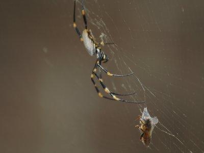 Your friendly neighbourhood spider man!!!