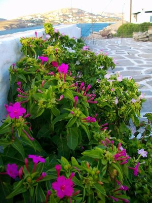 nature on Paros