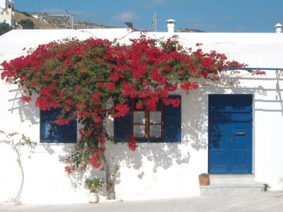 nature on Paros island