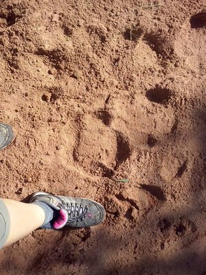 Rhino footprints