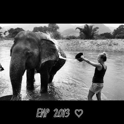 bathing elephants ♡