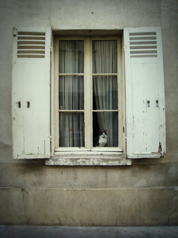 Parisian Cat