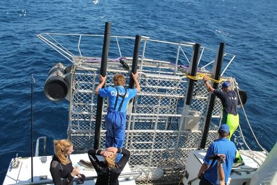 The cage to view the sharks in, being prepared
