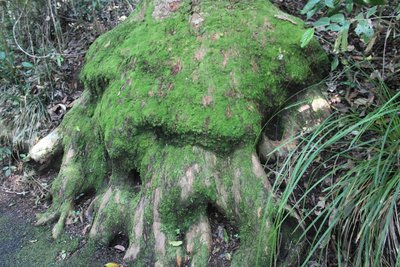Interesting tree trunk