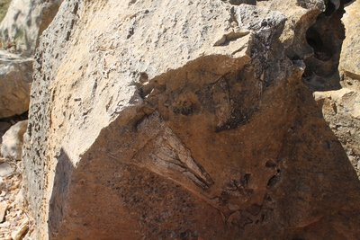 Riverleigh fossil of Big Bird