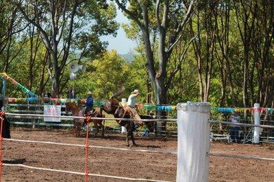 more rodeo fun