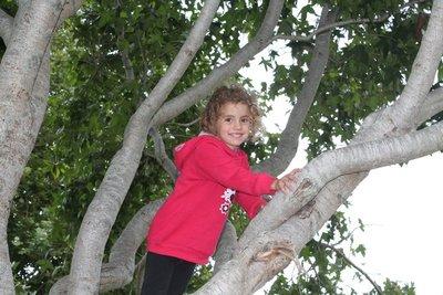 Miss Monkey tree climbing again