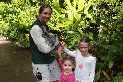 patting the koala