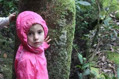 Bushwalking in the Daintree