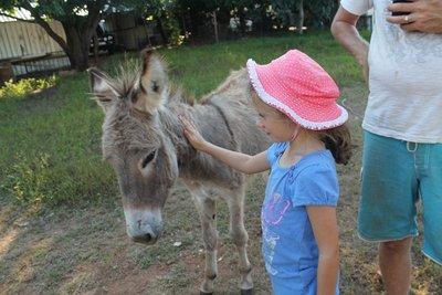 Donkey patting at the station