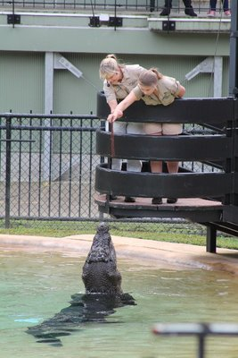Bindi Irwin feeding the croc
