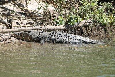Croc # 4