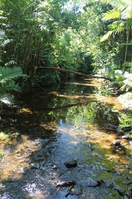 Beautiful creek in the Rainforest