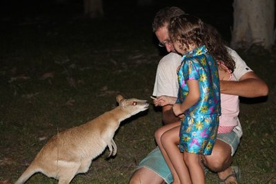 hand-feeding the Wallaby