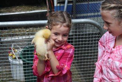 Farm petting time