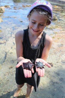 Look at my starfish mum!