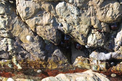 Rock pool discoveries