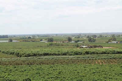 the view of the farms in Mildura