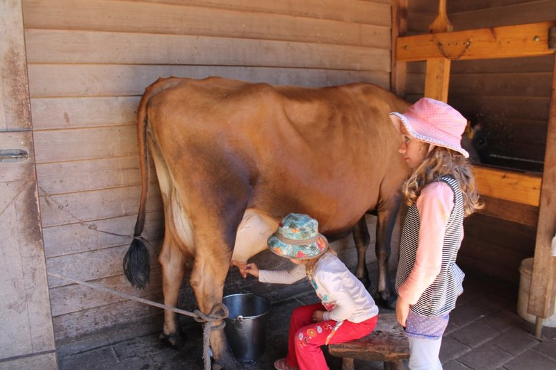 Milking the cow time....