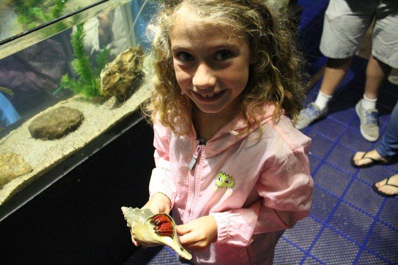 Huge Hermit Crab