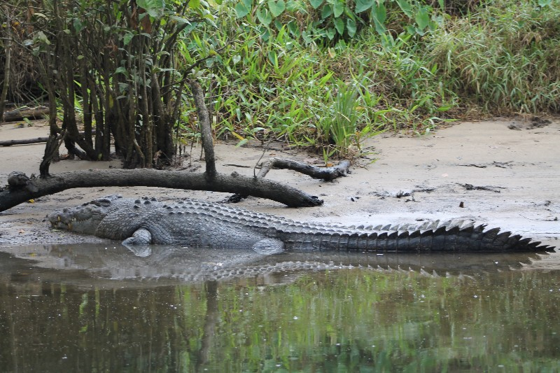 Croc # 1