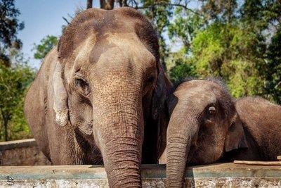 Elephant, Dubare