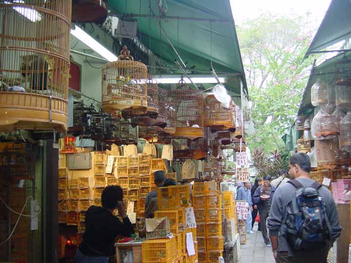 large_Hong_Kong_Bird_Market.jpg