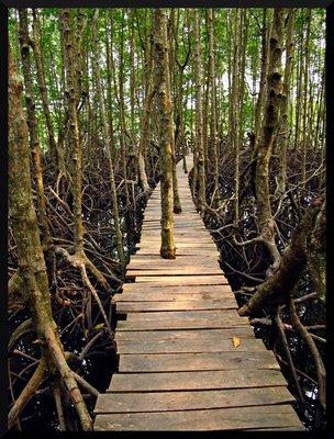 kong_mangrove.jpg