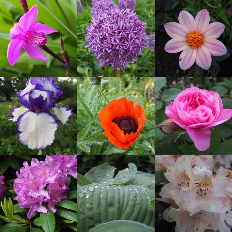 Plants & Blooms
