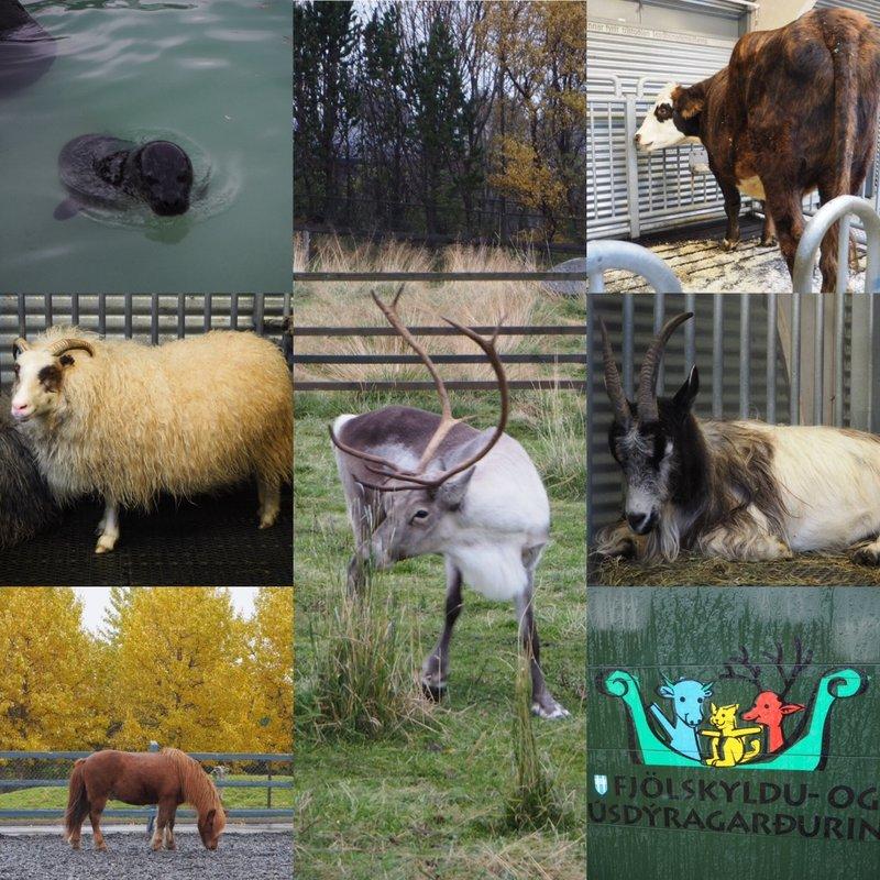 Reykjavik zoo