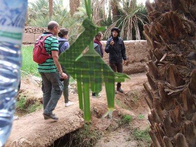 Palm camel