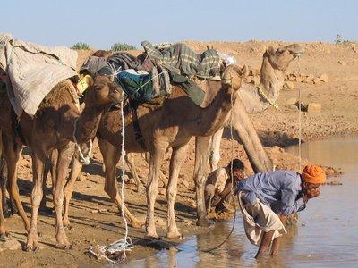 Drinking like a camel