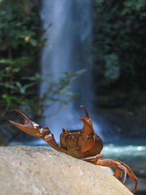 Wet Crab