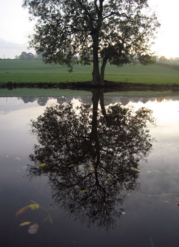 Canal Reflection