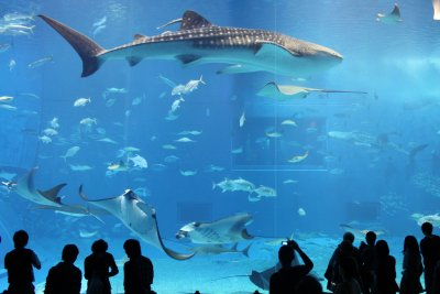 People Standing In Front of The Okinawa Churaumi Aquarium