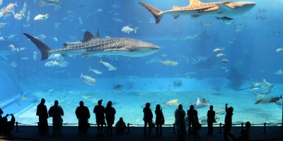 The World's Second Largest Aquarium - Okinawa Churaumi Aquarium