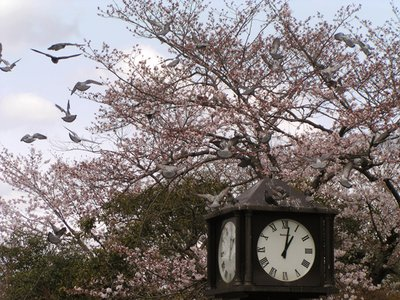 Sakura and the clock in Kyoto