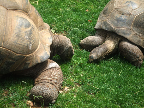 Turtles in Zoo