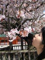 Me kissing the sakura