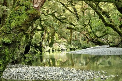 Clinton River on the Milford Track, New Zealand