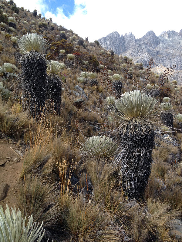 Venez 2014 / Trek Andes / J3 / Pico Humbolt