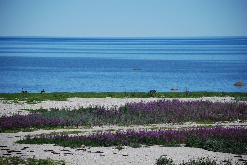 Hudson Bay