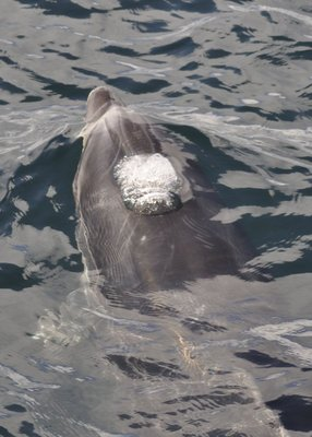 Dolphin_12.jpg