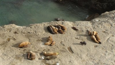 Another colony of sea lions