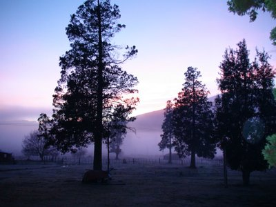 Frosty, foggy mornings on the ranch!
